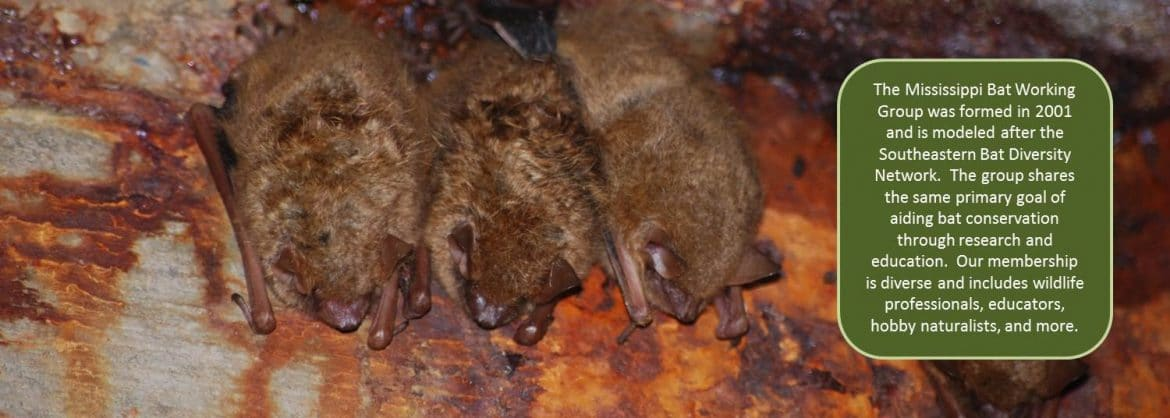 Mississippi Bat Working Group